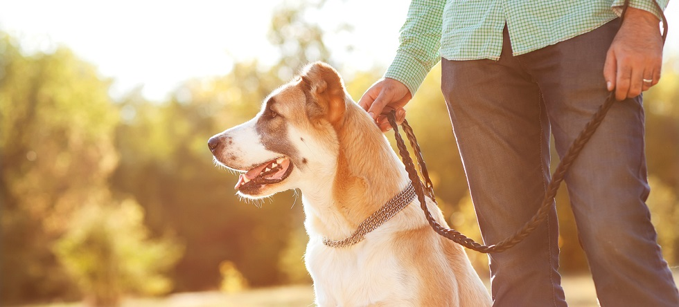 Dog Trainer Reviews